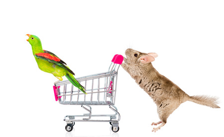 lanigera: Chinchilla and parrot with shopping trolley. isolated on white background. Stock Photo