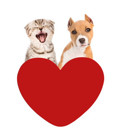 meowing: meowing cat and dog look out for red heart. isolated on white background. Stock Photo