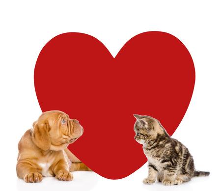 perros graciosos: El gato y el perro con el corazón rojo grande. aislado sobre fondo blanco. Foto de archivo