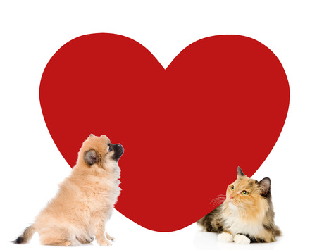 Puppy and kitten with big red heart looking at camera. Space for text. isolated on white background.