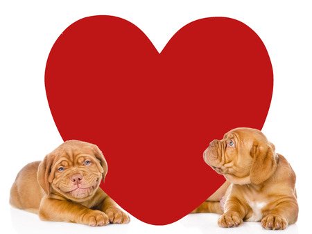 paramour: Two puppies with big red heart. isolated on white background.