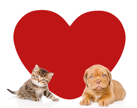 Cat and dog with big red heart looking at camera. Space for text. isolated on white background. Stock Photo