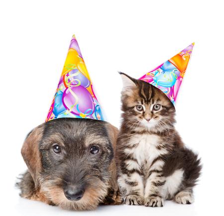 Kat en hond in verjaardags hoeden kijken camera samen. Geïsoleerd op een witte achtergrond.