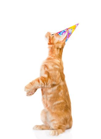 white playful: playful cat with birthday hat looking up. isolated on white background.