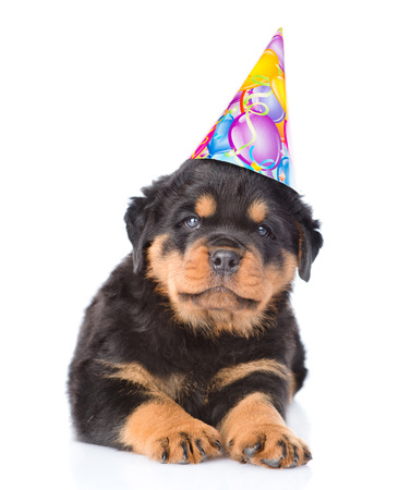 Rottweiler puppy in birthday hat. isolated on white background. Stock Photo