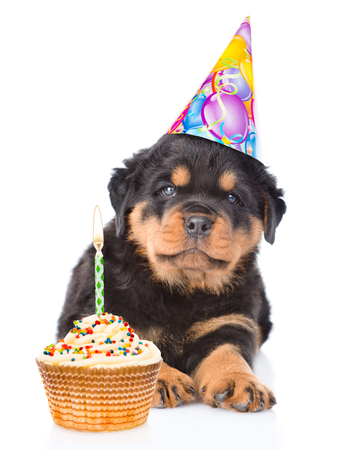 Rottweiler puppy in birthday hat with and cake. isolated on white background.