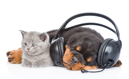 white cats: Kitten and sleeping puppy listening to music on headphones. Isolated on white background.