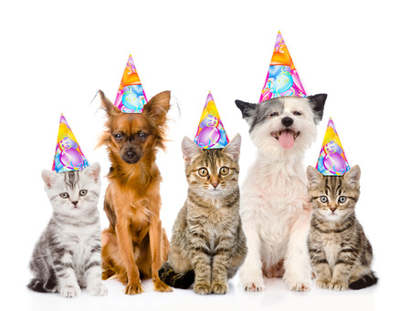 Large group cats and dogs in birthday hats. isolated on white background.
