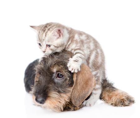 gato jugando: Gato que juega con el perro. aislado sobre fondo blanco.