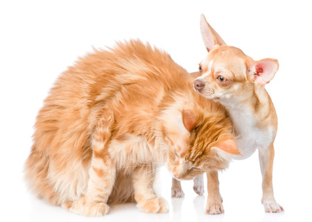 stroked: kitten gently stroked a puppy. isolated on white background. Stock Photo