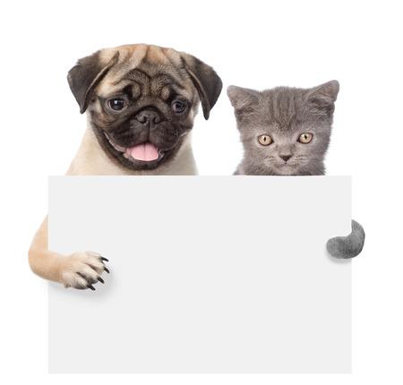 고양이와 개는 빈 보드 뒤에서 엿보기 카메라를 찾고. 화이트에 격리입니다. 스톡 콘텐츠