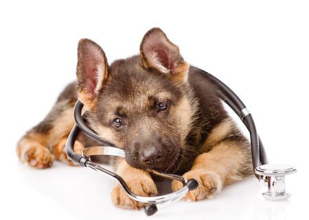 彼の首に聴診器で遊び心のあるジャーマン ・ シェパードの子犬。白い背景上に分離。