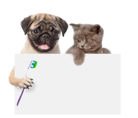 El gato y el perro con un cepillo de dientes asomando por detrás de la tarjeta vacía. aislado sobre fondo blanco.