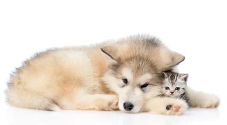 Sad dog embracing kitten. isolated on white background.