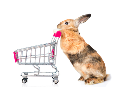 Rabbit with shopping trolley. isolated on white background.