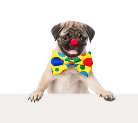 placard: Clown dog peeking from behind empty board. isolated on white background.