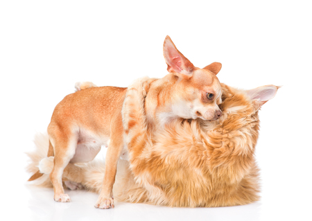 dog bite: fight cats and dogs. isolated on white background. Stock Photo