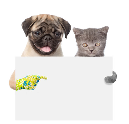 carlin: Cat and Dog peeking from behind empty board and points on empty banner. isolated on white background. Stock Photo