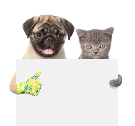 carlin: Cat and Dog peeking from behind empty board and showing thumbs up. isolated on white background. Stock Photo