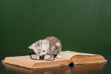 kitten: kitten playing with glasses on a book near empty chalkboard.