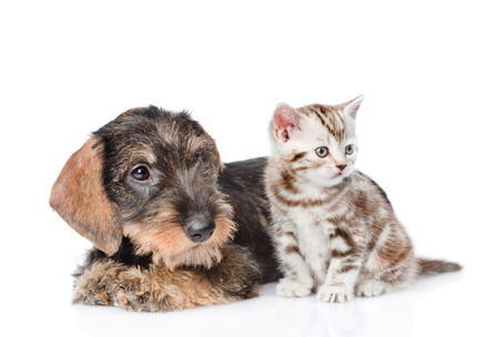 dog cat: Baby kitten and puppy together. isolated on white background. Stock Photo