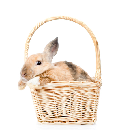 mini farm: Lop-eared rabbit sitting in basket. isolated on white background. Stock Photo