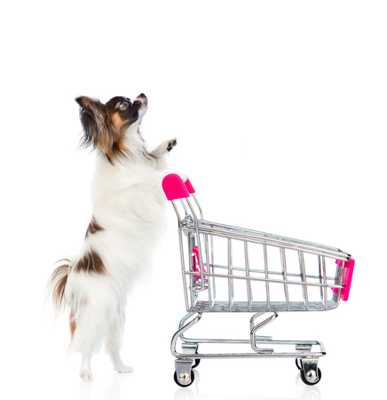 Dog with shopping trolley looking up. isolated on white background. Stock Photo