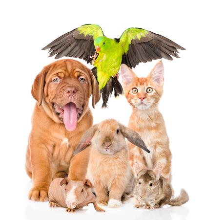 Groupe d'animaux ensemble en vue de face. Isolé sur fond blanc. Banque d'images - 55198624