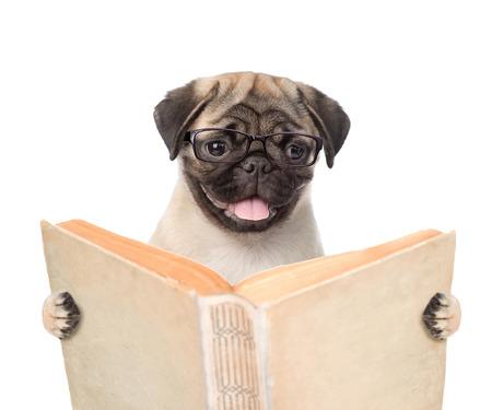 パグ子犬持株開かれた本。白い背景上に分離。 写真素材