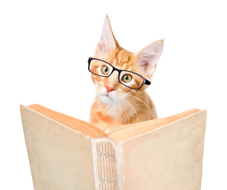 cat with glasses reading a book. isolated on white background.