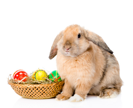 mini farm: Rabbit with basket easter eggs. isolated on white background.