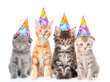 Large group of small cats with birthday hats. isolated on white background.