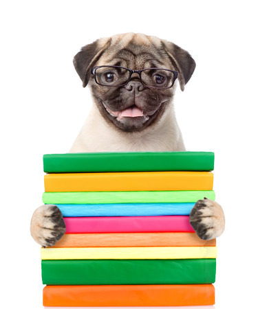 carlin: Pug puppy holding books. isolated on white background.