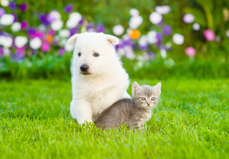 white cats: Puppy and kitten sitting on green grass.