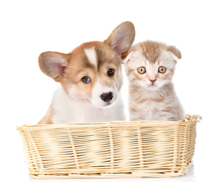 baskets: Cat and dog sit in a wicker basket. Isolated on white background. Stock Photo