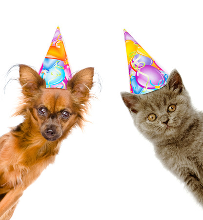 cat and dog in birthday hats look out from behind a banner. Isolated on white background. Standard-Bild