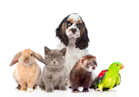 in a row: Group of pets together in front view. Isolated on white background. Stock Photo