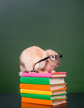 pile of books: Rabbit wearing glasses sitting on a pile of books near empty chalkboard. Stock Photo