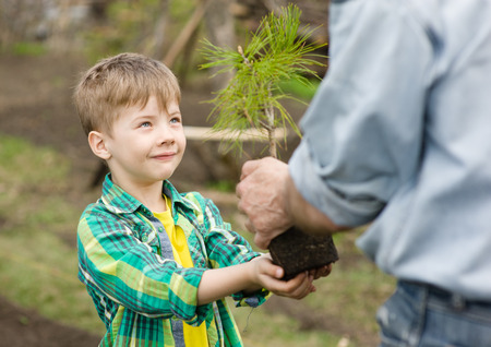 old hand: grandfather transmits to his grandson cedar sapling. Stock Photo