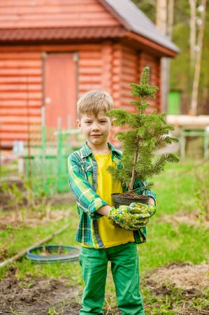spruce: boy holding a tree seedling in hands.