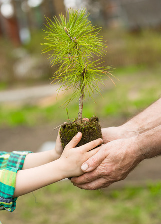 baby in hands: Senior man and baby holding young tree.