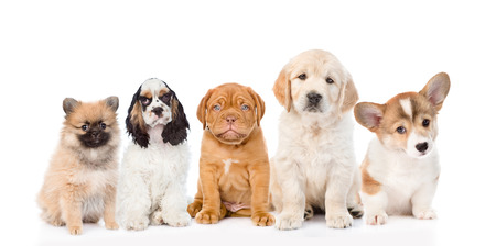 group of purebred puppies. isolated on white background. Stock Photo