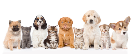 french mastiff: Group of cats and dogs sitting in a row. isolated on white background.