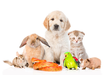 Large group of pets together in front view. Isolated on white background.