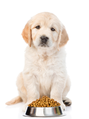 Golden retriever puppy bowl of dry dog food. isolated on white background.