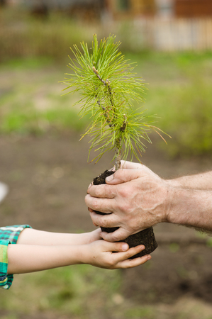 spruce: Senior man and baby holding young tree.