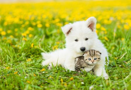 Cute puppy hugging a kitten on a dandelion field.