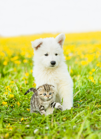 Puppy and kitten sitting together on a dandelion field.