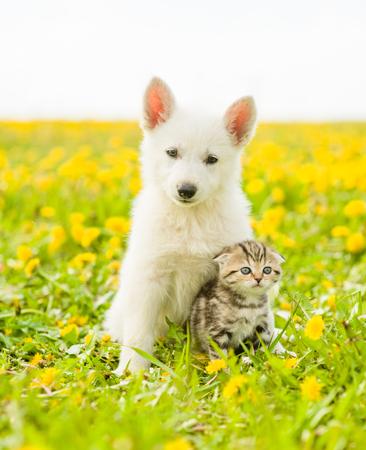 Welpe umarmt ein Kätzchen auf einem Feld von Löwenzahn.