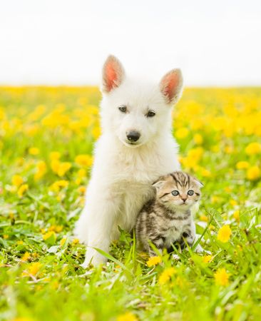 Puppy hugging a kitten on a field of dandelions.